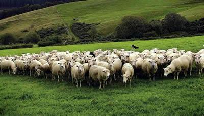 don't follow the flock